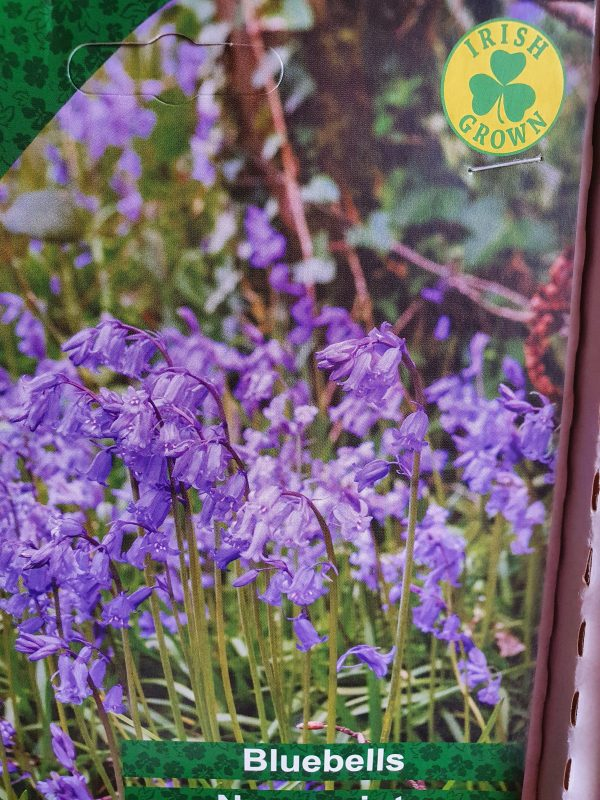 Bluebell Bulbs at Rockbarton