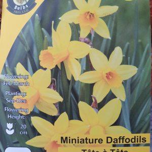 Daffodils miniature tete a tete - Rockbarton