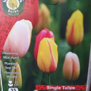 Single tulips - Rockbarton