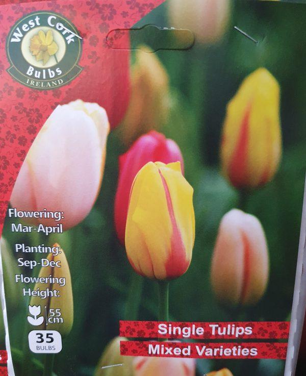 Single tulips - Rockbarton