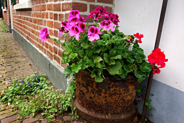 Pink and red flowers in a hanging baskey.