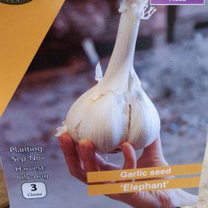 Elephant Garlic at Rockbarton