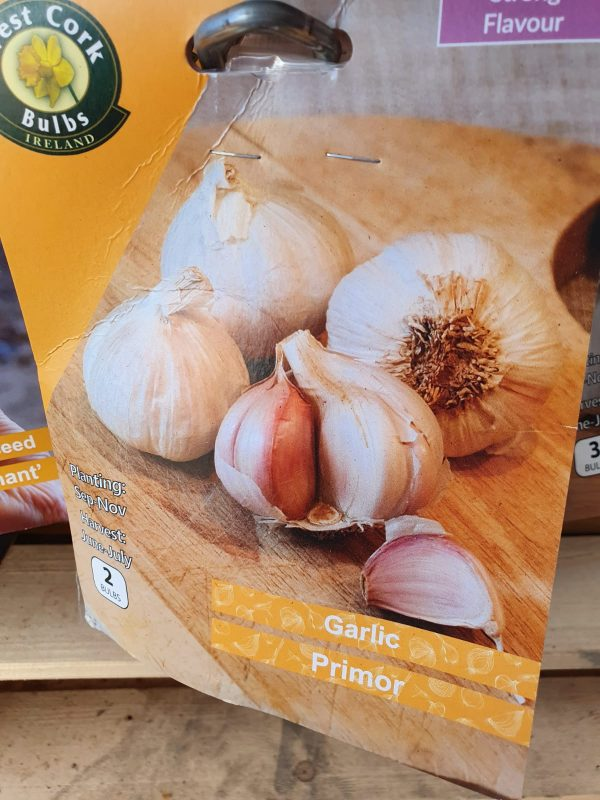Primor Garlic at Rockbarton