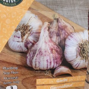 Germidour Garlic at Rockbarton