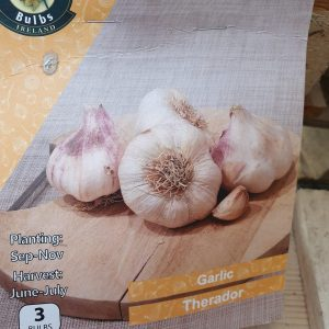 Therador Garlic at Rockbarton