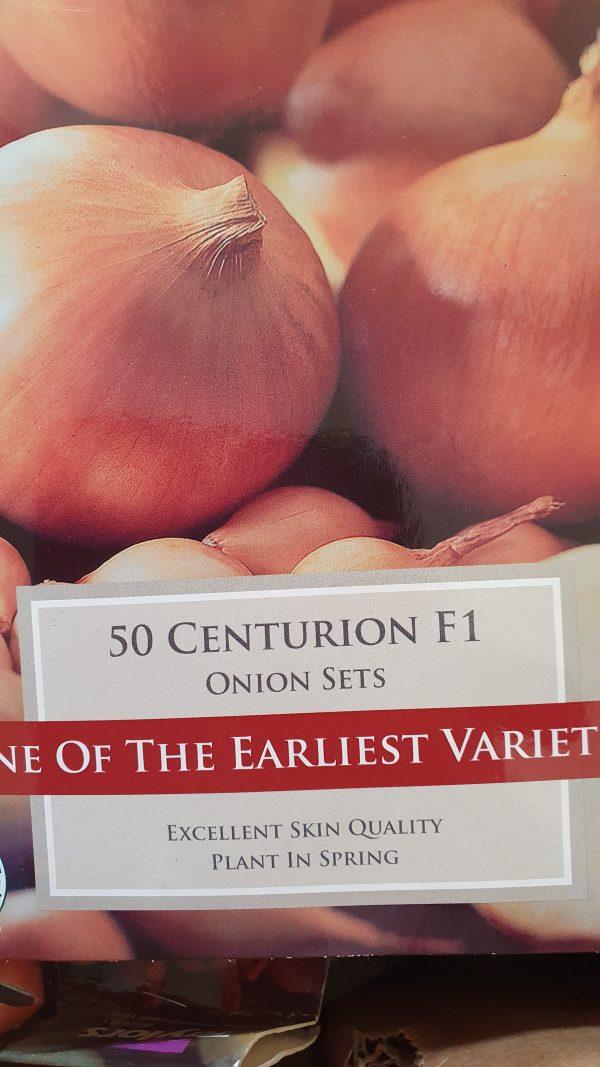 Centurion F1 Onion Sets