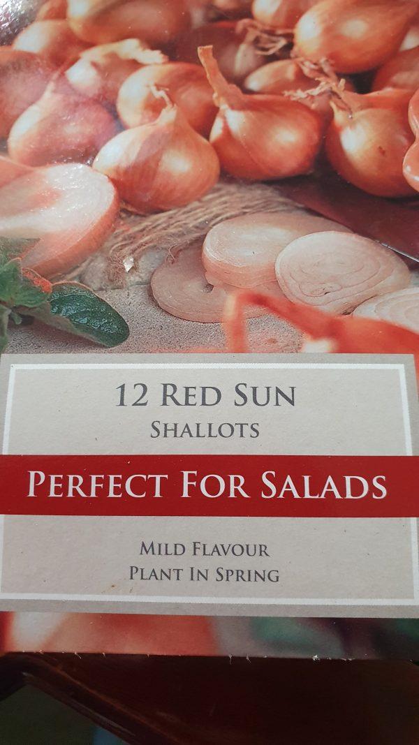 Red Sun Shallots