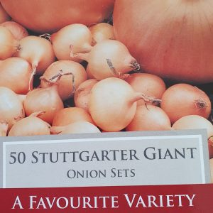 Stuttgarter Giant Onion Sets