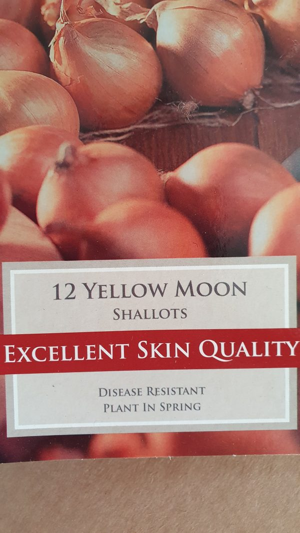 Yellow Moon Shallots
