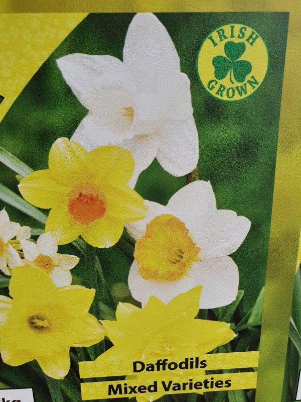 Daffodil Mixed Variety Bulbs