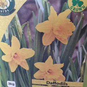 Daffodils Mando Rockbarton