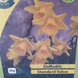 Standard Value Daffodils